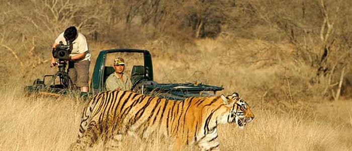 Golden Triangle with Tigers 6 nights & 7 Days